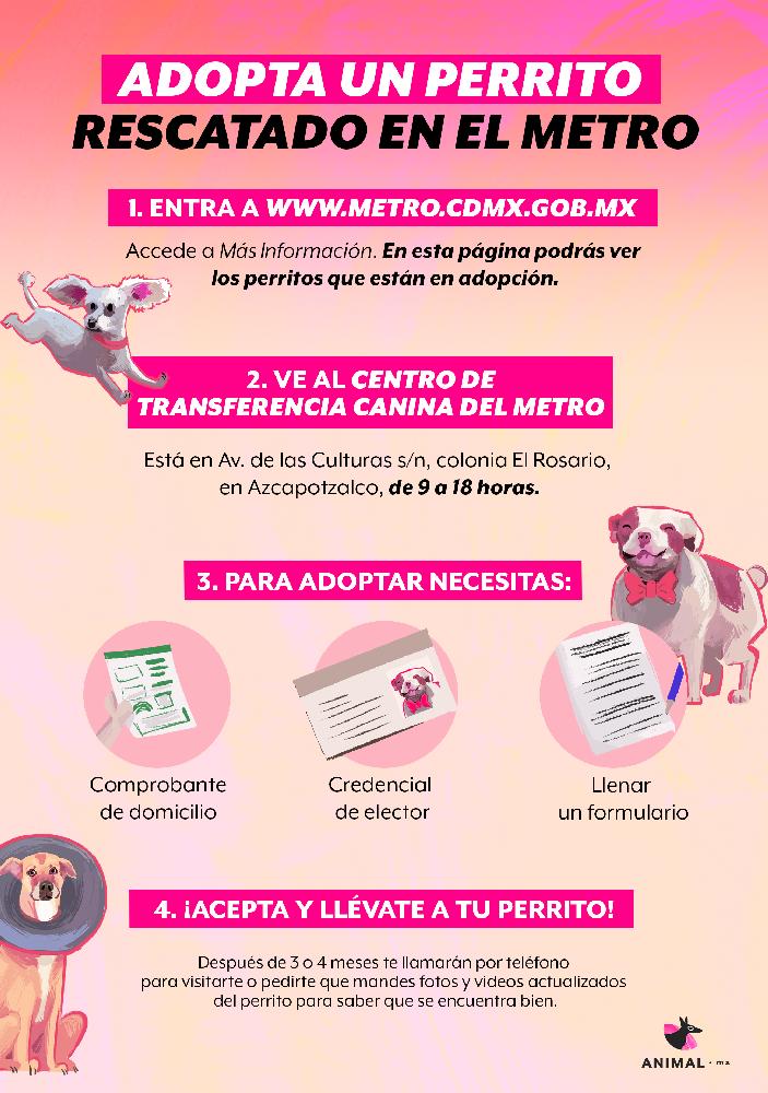 ¡Adopta a un perrito rescatado del Metro!