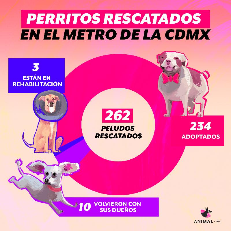 En dos años de operación, el CTC ha ayudado a todos estos perritos.