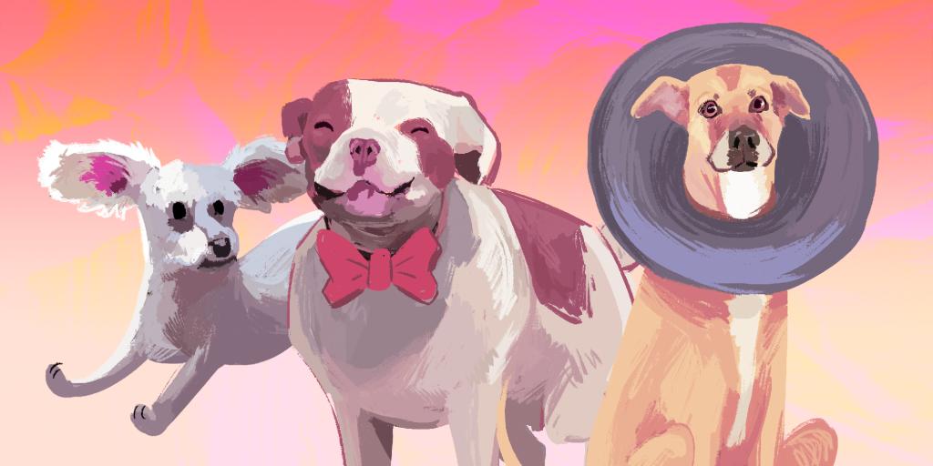 Las historias de los perritos rescatados del metro