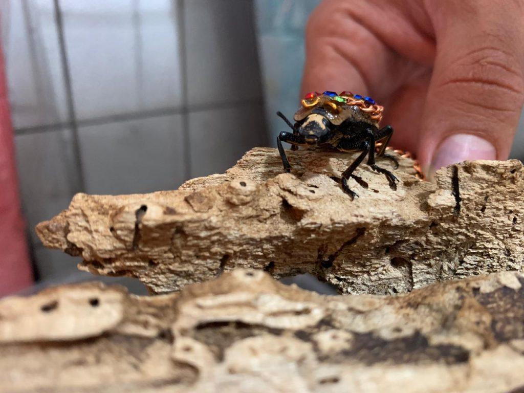 El 'Maquech' es un animalito usado como joya por mujeres yucatecas. Foto: Animal MX