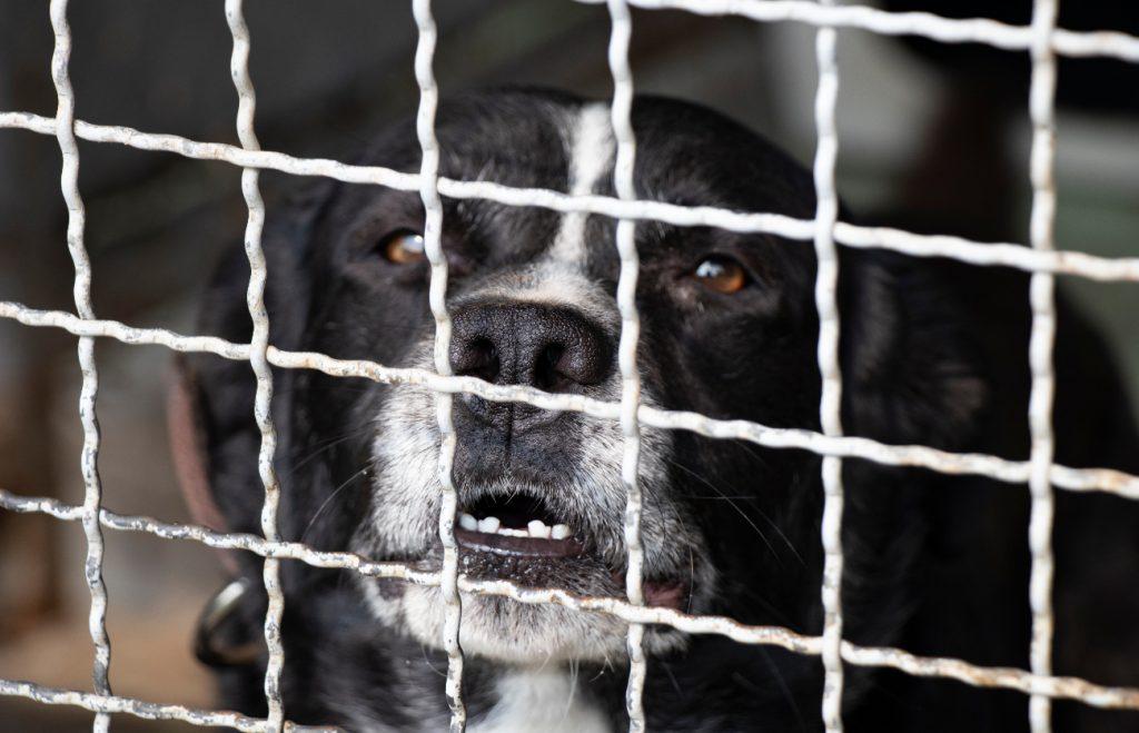 Algunos perritos salen de sus casas siguiendo a sus dueños.