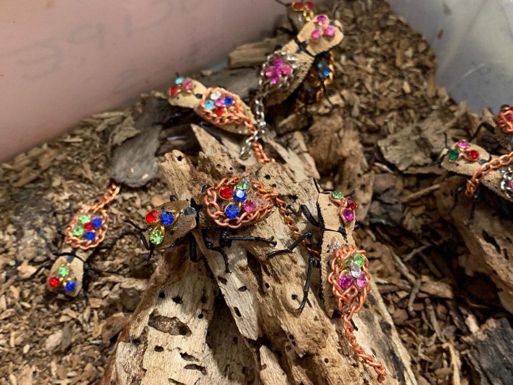 El Maquech come maderita vieja no resinosa y hongos y setas. Foto: Animal MX