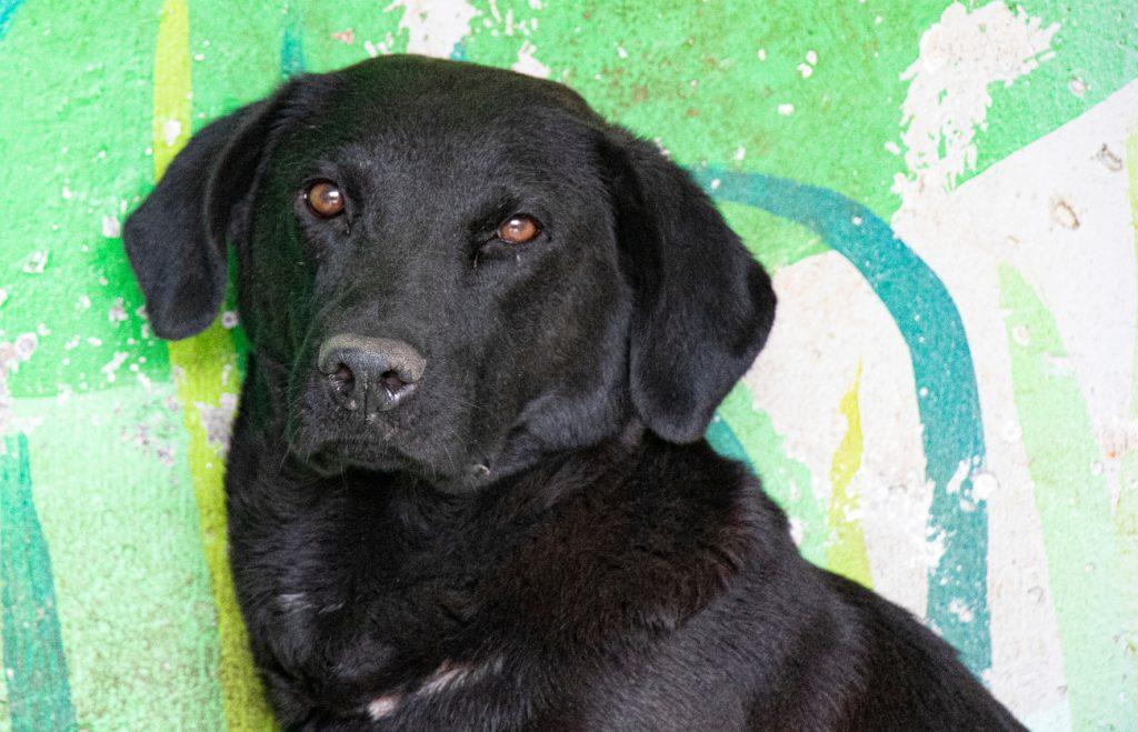 Martina acababa de tener cachorros cuando fue encontrada y está en rehabilitación.