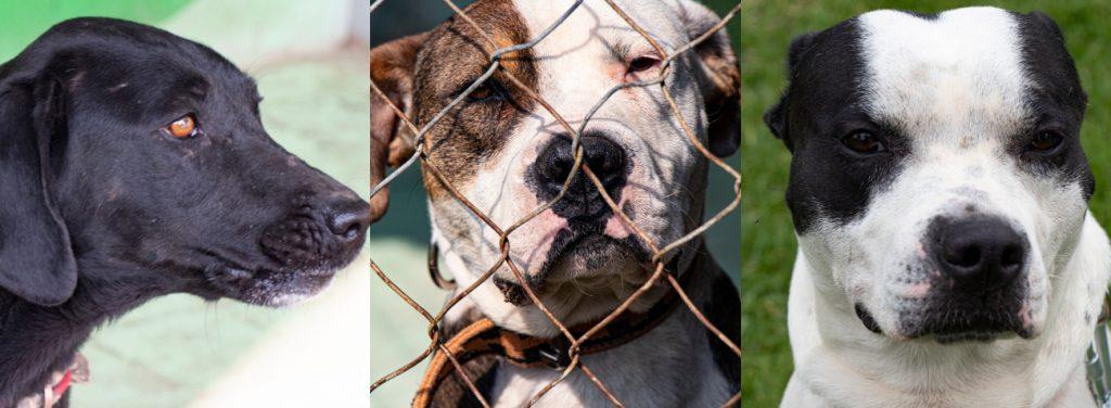 Actualmente hay 24 perritos que pueden ser adoptados.