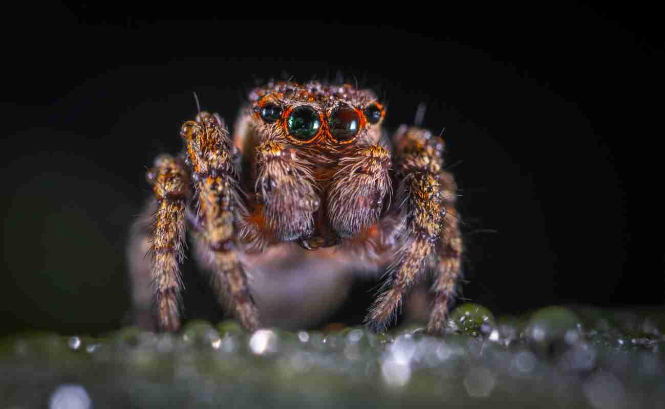 Por qué es necesario el Control de plagas de las arañas