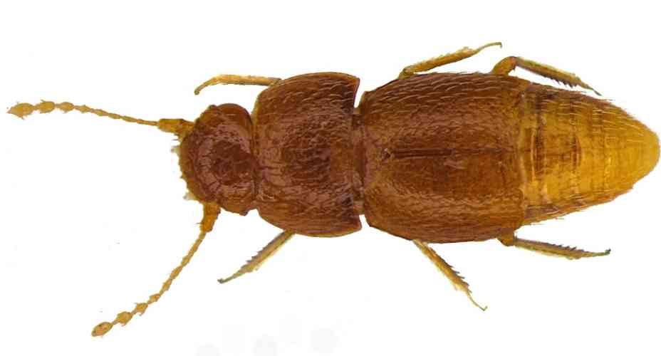 greta-thunberg-insecto-escarabajo-cambio-climatico-crisis-nota