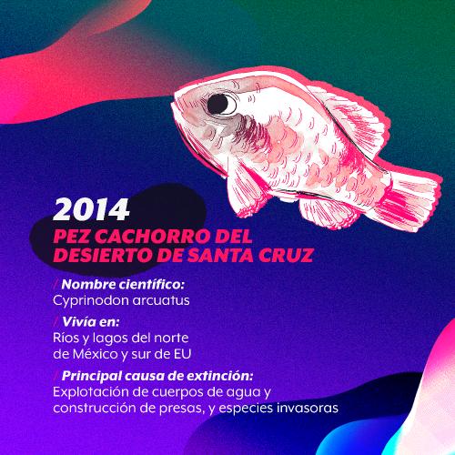 extincion-2014