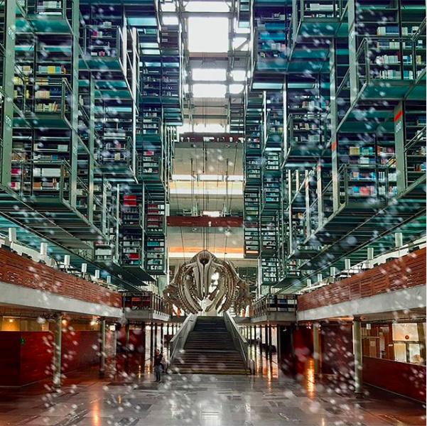 lugares para estudiar hacer tarea biblioteca vasconcelos