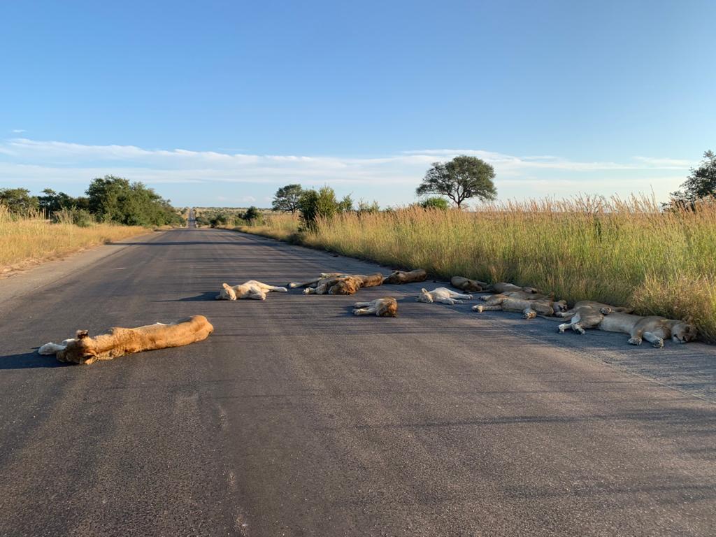 Foto: Richard Sowry para Kruger National Park