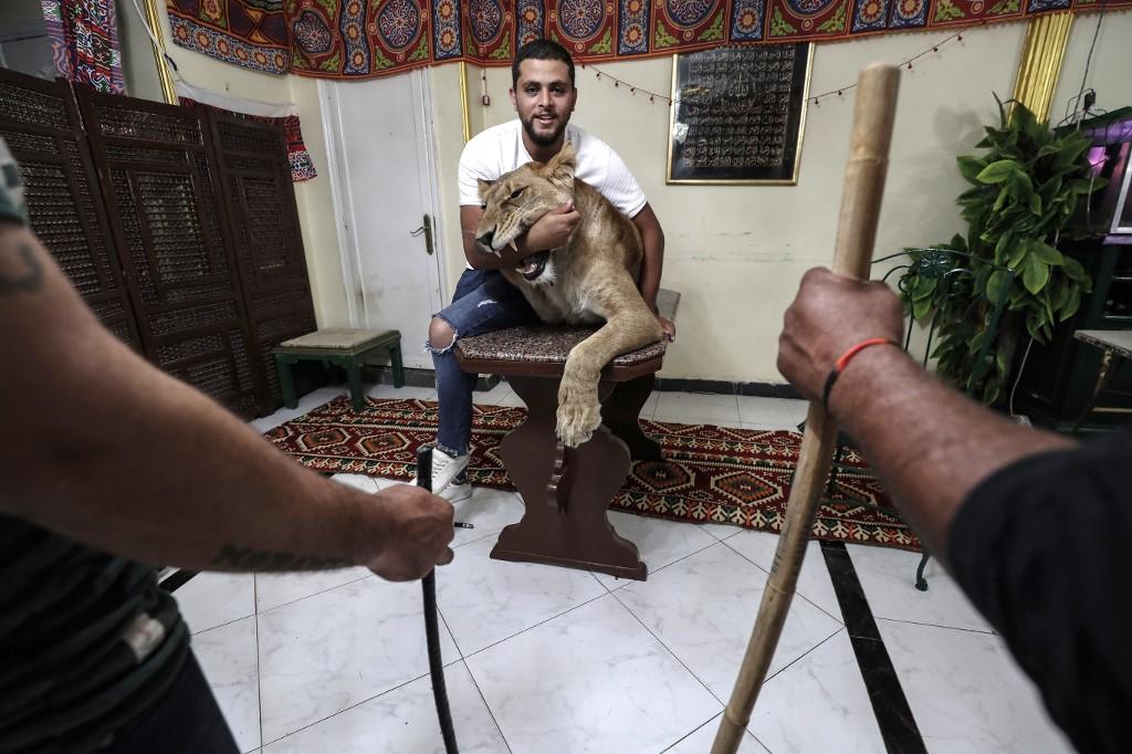 domadores de leones egipto