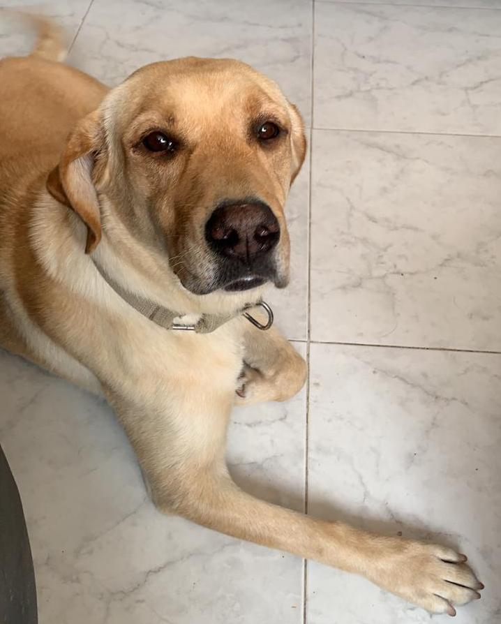 Wanda es una perrita que recién llegó a la familia de Animal MX.