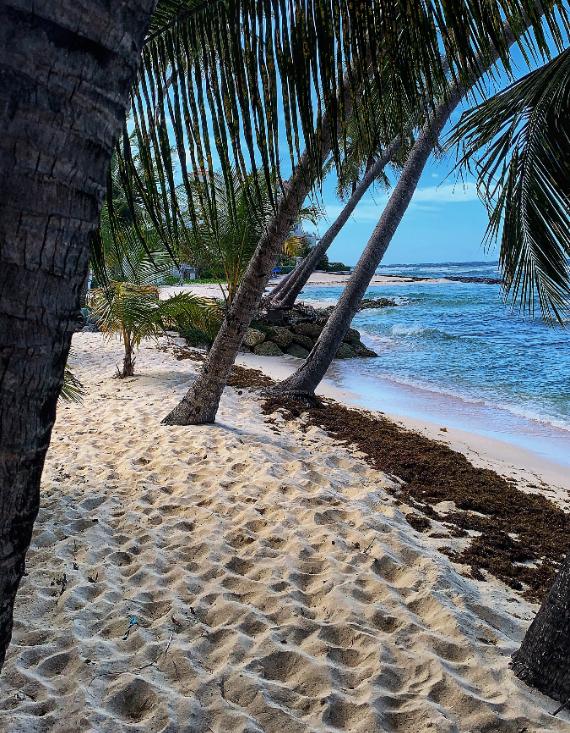 Imagínate tener una junta a distancia con esta vista de Barbados. Foto: David Cain para Unsplash