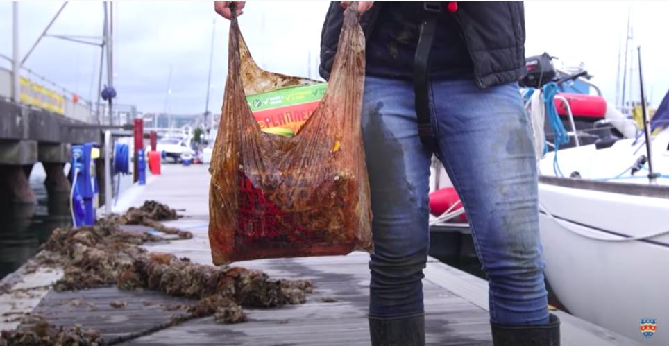 El plástico de las bolsas compostables y biodegradables no se desintegra fácilmente. Foto: Universidad de Plymouth