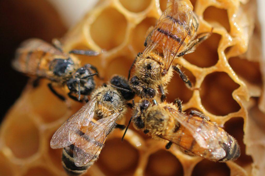 Se encontraron microplásticos en miel. Foto: Shelby Cohron | Unsplash