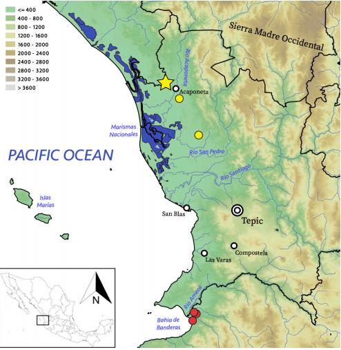En las áreas señaladas con amarillo es donde se han encontrado las tortuguitas recién descubiertas. Foto: Artículo Zootaxa 2020