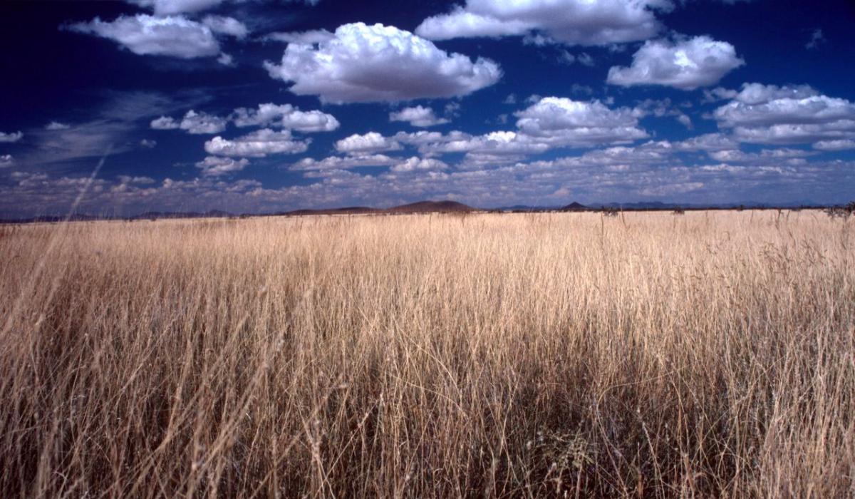 Pastizales de la reserva de la biosfera de Janos, Chihuahua. Foto: Ganesh Marin | Cortesía doctor Ceballos, Instituto de Ecología de la UNAM