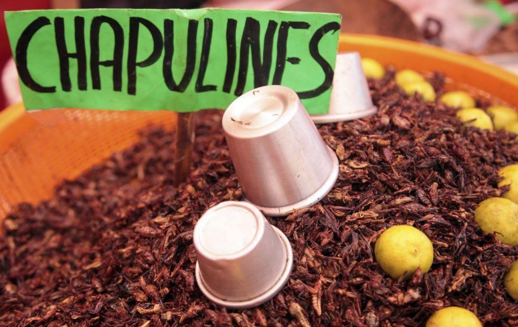Los chapulines forman parte de la gastronomía mexicana desde la época prehispánica. Foto: Cuartoscuro
