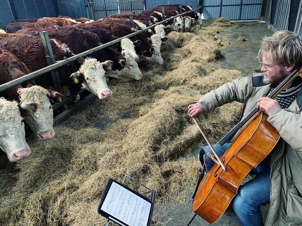 Jacob Shaw es el fundado de la Escuela Escandinava de Chelo. Foto: Facebook Scandinavian Cello School / Jacob Shaw