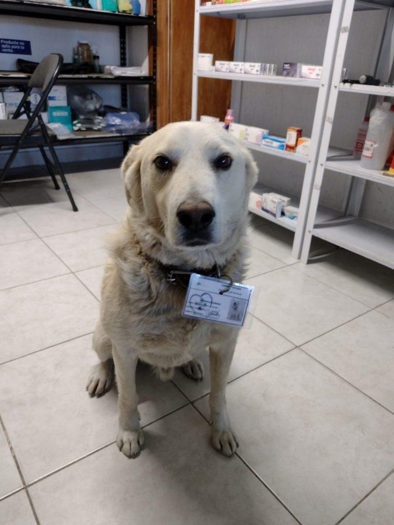 Matute protegió la Farmacia Victoria en Pachuca de un extraño. Foto: Facebook Adriana Dorazco